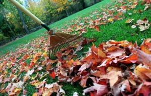 Fall Clean-Up - Perfect Touch Landscape