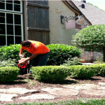 shrub trimming springfield mo